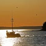 カナダ連邦政府の舵取りが自国の海を悪化させているとの研究報告