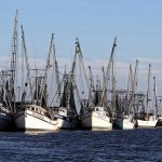 Dynamic ocean management can reduce fisheries bycatch