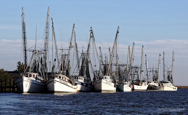 "Image: ""Fleet at Rest"" by Savannah Sam Photography, CC BY-NC-ND 2.0."