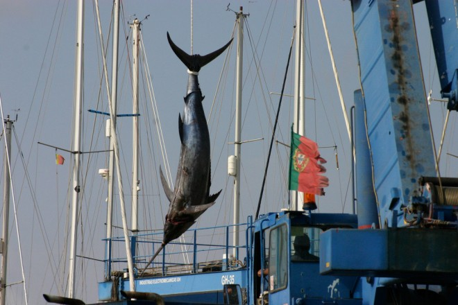 "Image: ""Hooking a swordfish"" by Paul Glavin, CC BY-NC-ND 2.0."