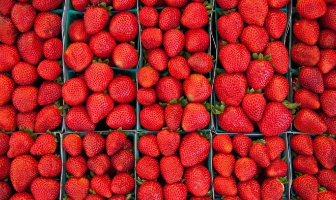 "Most people eat strawberries when they're in season, so why is salmon any different? Image: ""Strawberry Fields"" by djjewelz, CC BY-ND 2.0."