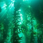 Heatwaves in the ocean – ETH Zurich blogpost