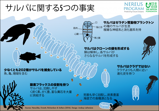 5-facts-about-salps-japanese-infographic