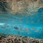 Global change in the trophic functioning of marine food webs