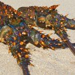乱獲と人口過剰:資源量に対して漁師が多すぎる、は本当か?
