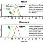 ネレウスブログ2:レベッカ・アシュは、「気候変動は季節や魚に影響を及ぼしている」と考える。