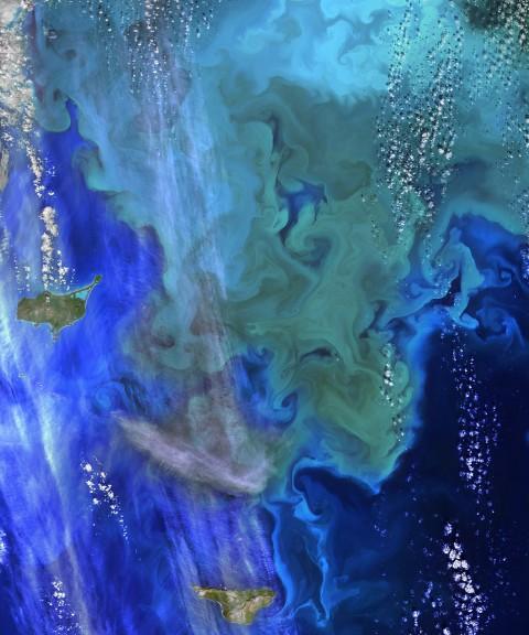 "El Ninos can cause harmful algal blooms. Image: ""NASA Ocean Data Shows 'Climate Dance' of Plankton"" by NASA Goddard Space Flight Center, CC BY 2.0."