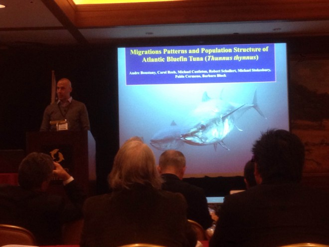 Boustany opened the first session of the three-day event with a synopsis of our knowledge on 'Migration patterns and population structure of Atlantic bluefin tuna (Thunnus thynnus)