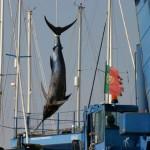 アメリカ北西大西洋におけるマグロやカジキの理想の漁業条件を調査