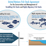 Managing straddling and highly migratory fish stocks: Nereus holds side event at the UN Fish Stocks Agreement Review