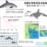 コガシラネズミイルカが絶滅危惧種になったのは漁業の問題だけではなく、社会的、生態学的問題でもある
