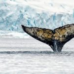 南極海における紛争解決と調査捕鯨