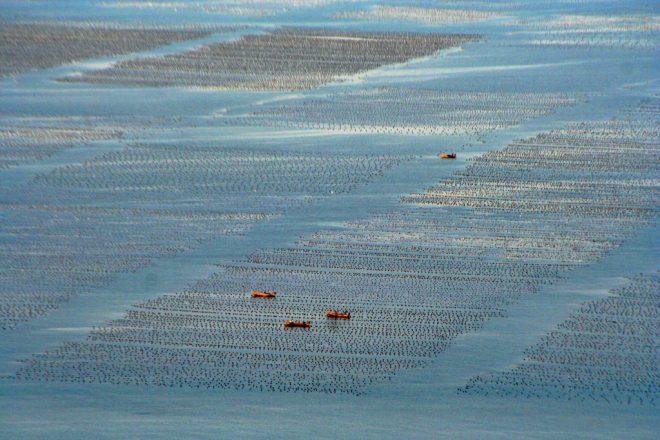 "Image: ""Aquaculture"" by Michael Chu, CC BY-NC-ND 2.0."