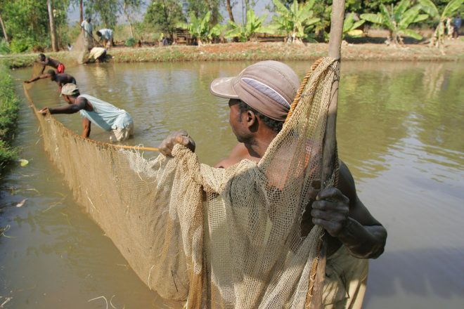 """Image: """"Farming fish. Photo by Stevie Mann, 2007"""" by WorldFish, CC BY-NC-ND 2.0."""