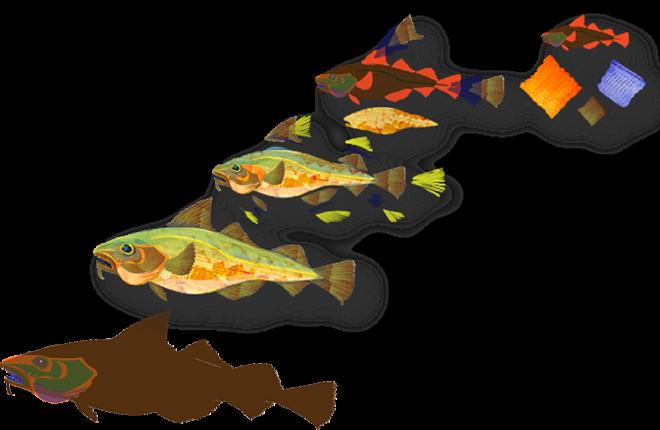 Jenn Glaser Ocean Recovery FiletingCodfish
