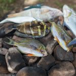 Sustainable management of the high seas could recoup fish stock losses due to climate change