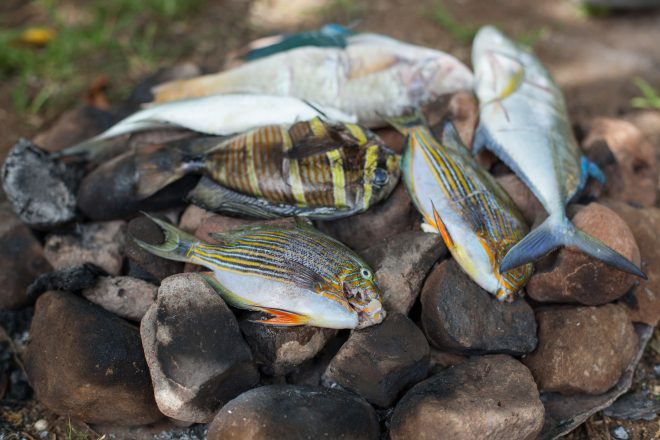 Reef fish are cooked on hot rocks, Santupaele village, Western Province, Solomon Islands. Photo by Filip Milovac.