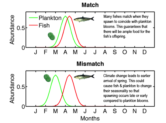 blog_rebecca asch-seasonality plankton fish