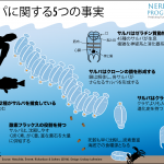 Our jelly-like relatives:サルパ類に関する誤認識