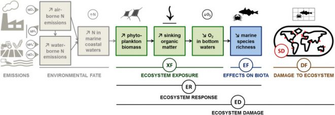 Fig. 1. Schematic representation of the marine eutrophication impact pathway. Cosme, N., et al., Spatial differentiation of marine eutrophication damage indicators based on species density. Ecol. Indicat. (2016), http://dx.doi.org/10.1016/j.ecolind.2016.10.026