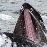 Top ten ocean and fisheries stories of the year on the Nereus Program website