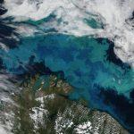 植物プランクトンから巨大マグロまで:気候変動が海の生態系のエネルギーの流れに及ぼす影響