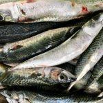 2017年PICES国際シンポジウム:イワシ等の小型浮魚類の生態に影響する気候変化等の要因の動向