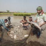ウェビナー:社会的責任のある水産物について