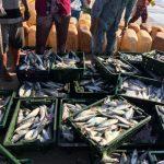 減少する支援金、増加する問題ー漁業の公正性