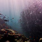 海洋資源管理における内燃エンジンは避けるべきである:ECCWOの反省