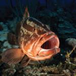 気候変動によってサンゴ礁に住む絶滅危惧種の保全が無効になる可能性